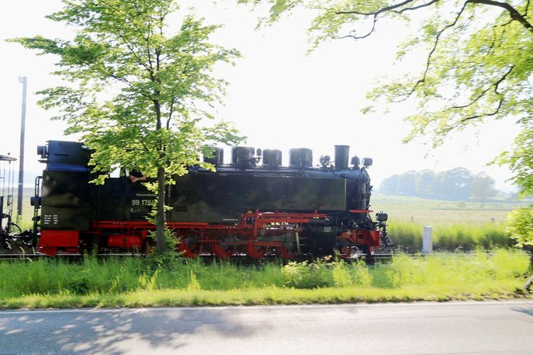 Rasender Roland  Day Field Grass Growth Landscape Locomotive Nature No People Outdoors Steam Train Transportation Tree