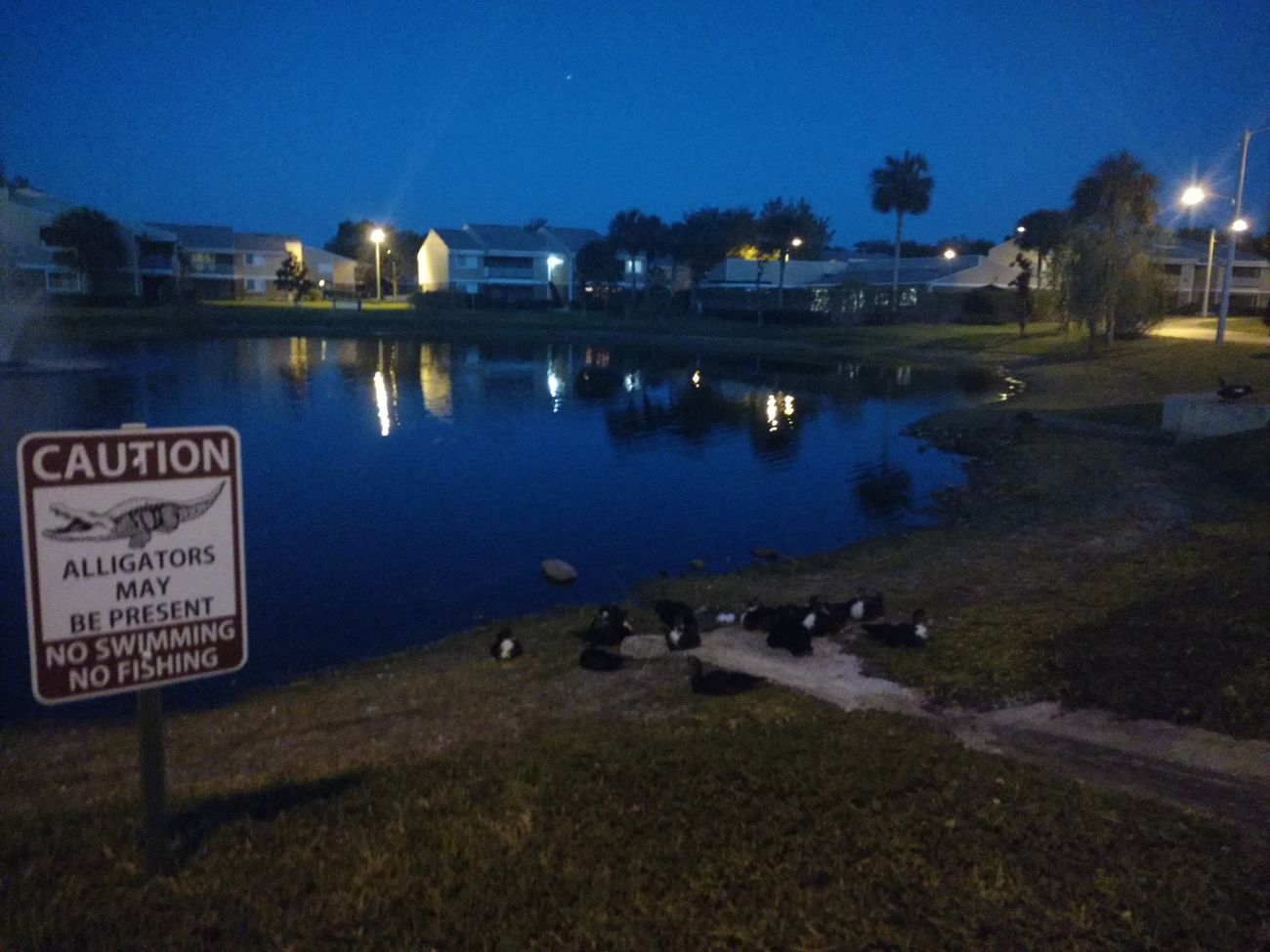 Night Water Illuminated Outdoors No People Sky Nature Architecture Nature Beauty In Nature Warning Sign Alligator Alligators Lake Duck Kissimmee