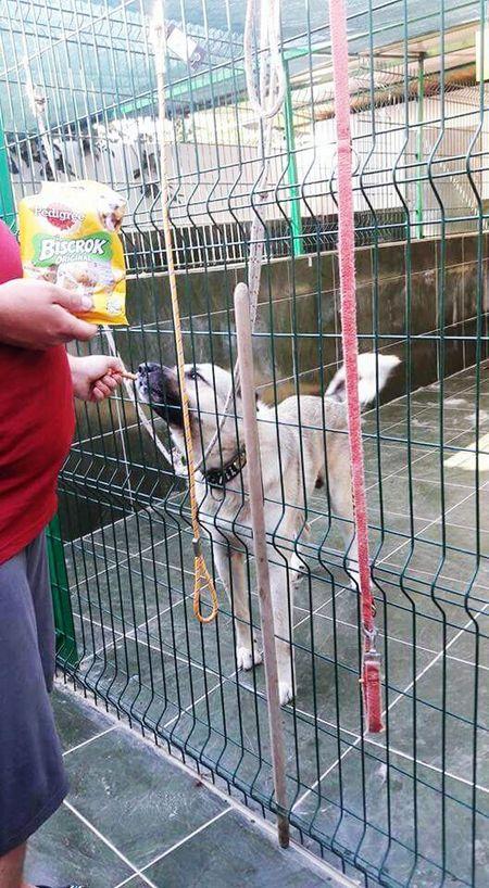 Dogs Visit Shelterlife Shelterdogs Türkiye Turkey Antalya♥ Alanya Visitturkey AdoptDontShop Adopt To Save A Life SUPPORT Helping Hand Donation = Sharing Donation To Better Life Streetdogs Donatetoanimalshelters