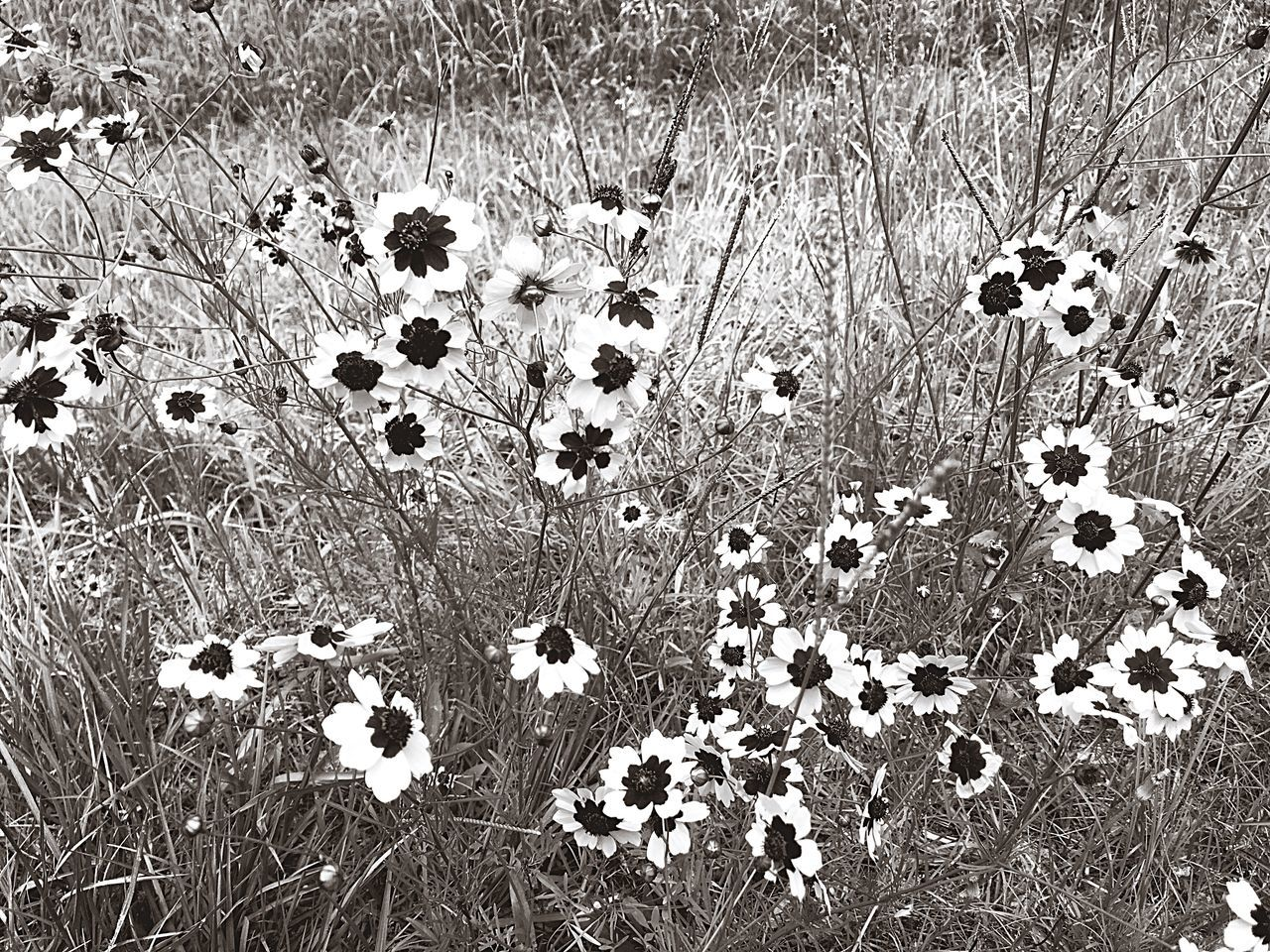 I Love The Little Things In Life 😍 Wild Flowers In Black And White Monochrome Photography