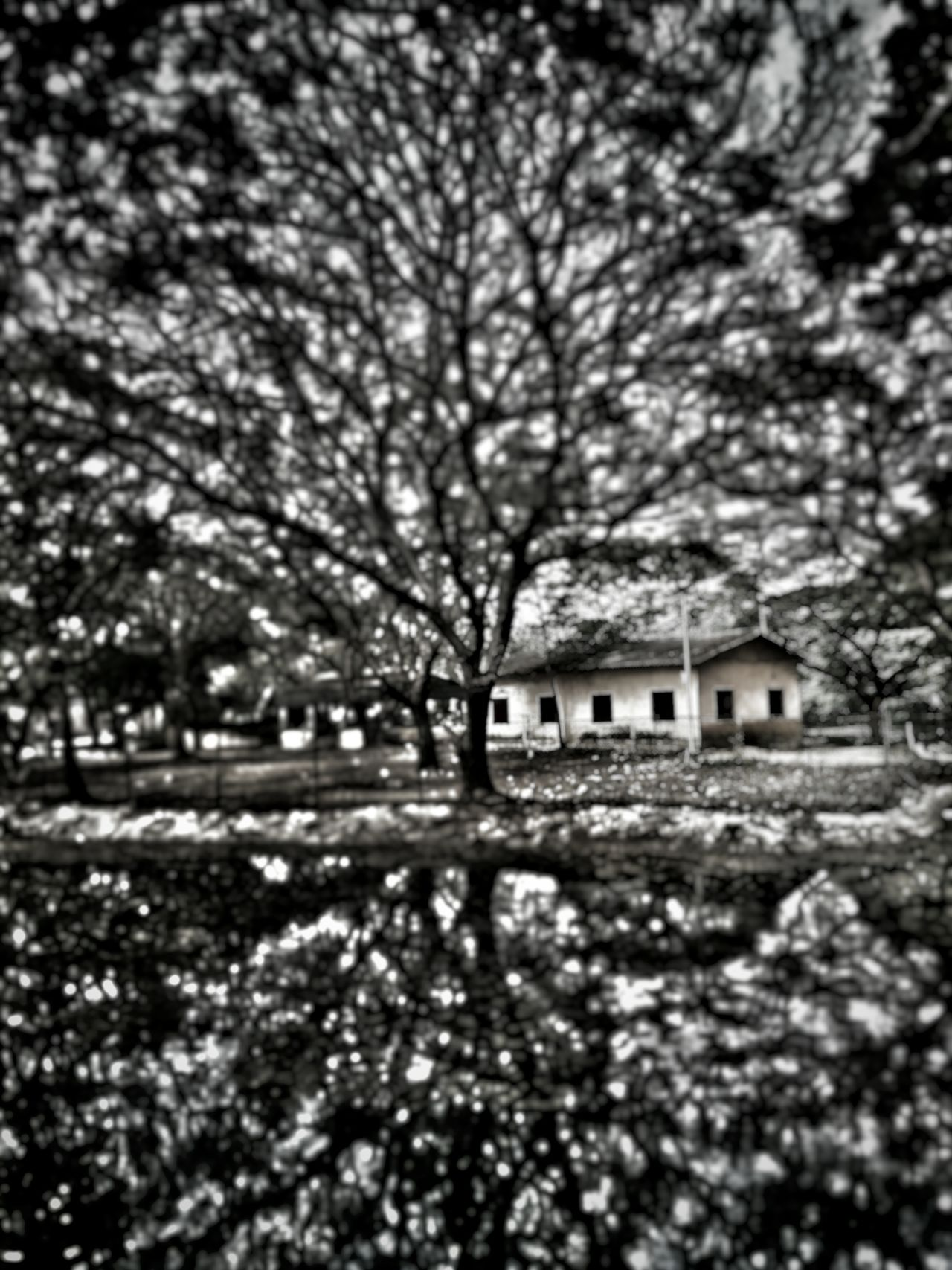 Built Structure House No People Outdoors Tree Day Nature Surreal Abstract Abstract Photography Mobilephotography EyeEm Gallery Oneplus2 India Edit Snapseed Chennai,India Tower Park Reflection Blurred Background Network Neural Art Close-up South India
