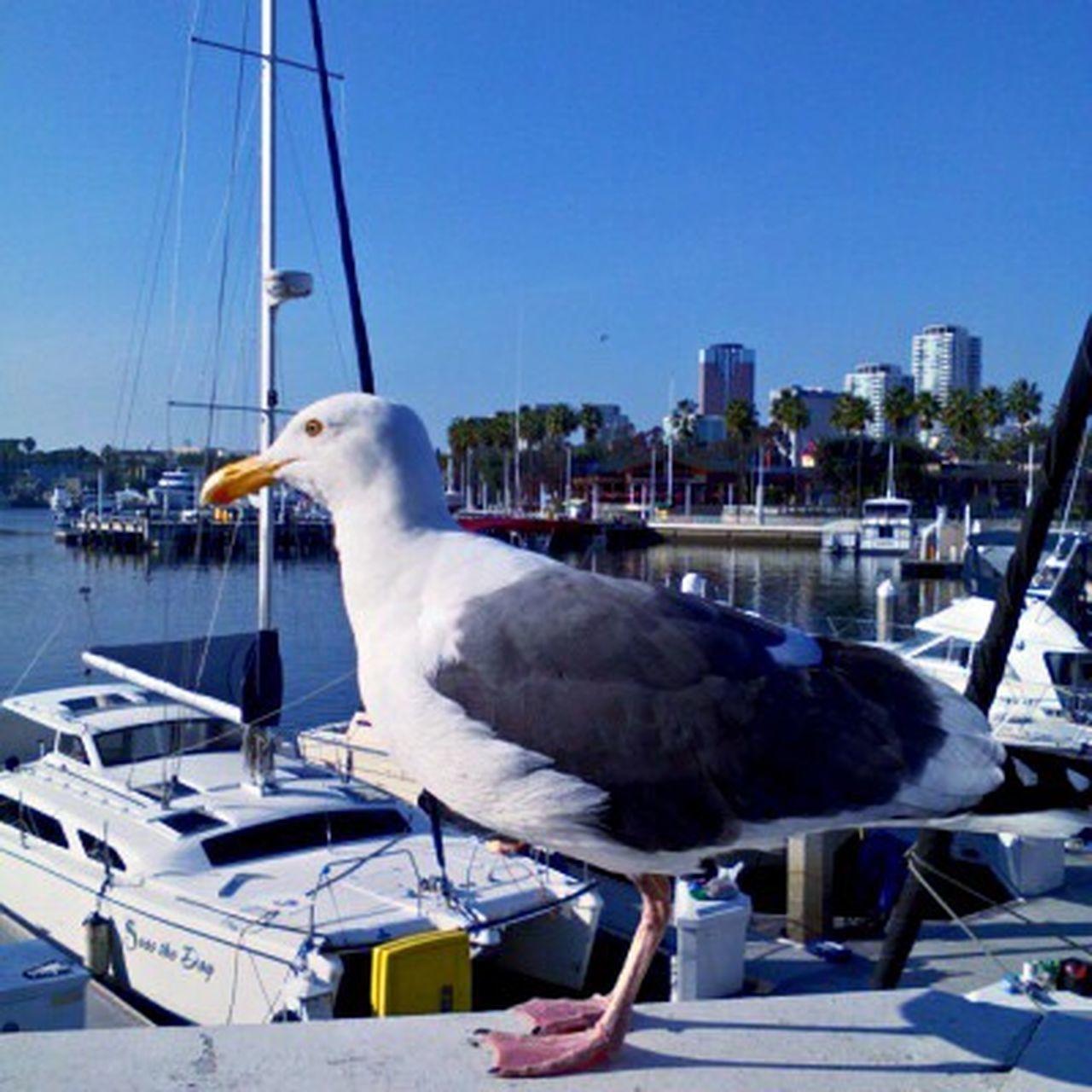 Animal Themes Bird Harbor Sailboat Close Up
