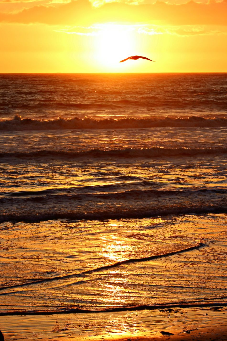 Sunset Sea Nature Beach Silhouette Orange Color Beauty In Nature Water Sun Sky Wave Yellow Outdoors Sand Horizon Over Water Romantic Sky Bird Gold Colored No People Day Nothing Gold Can Stay Beauty Zen All Is Beautiful All Is Well