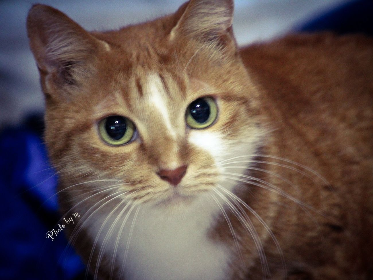 Cat Cat♡ Cat Lovers My Cat 猫 茶トラ猫 ウチの姫様 Animal Playing With The Animals Photography