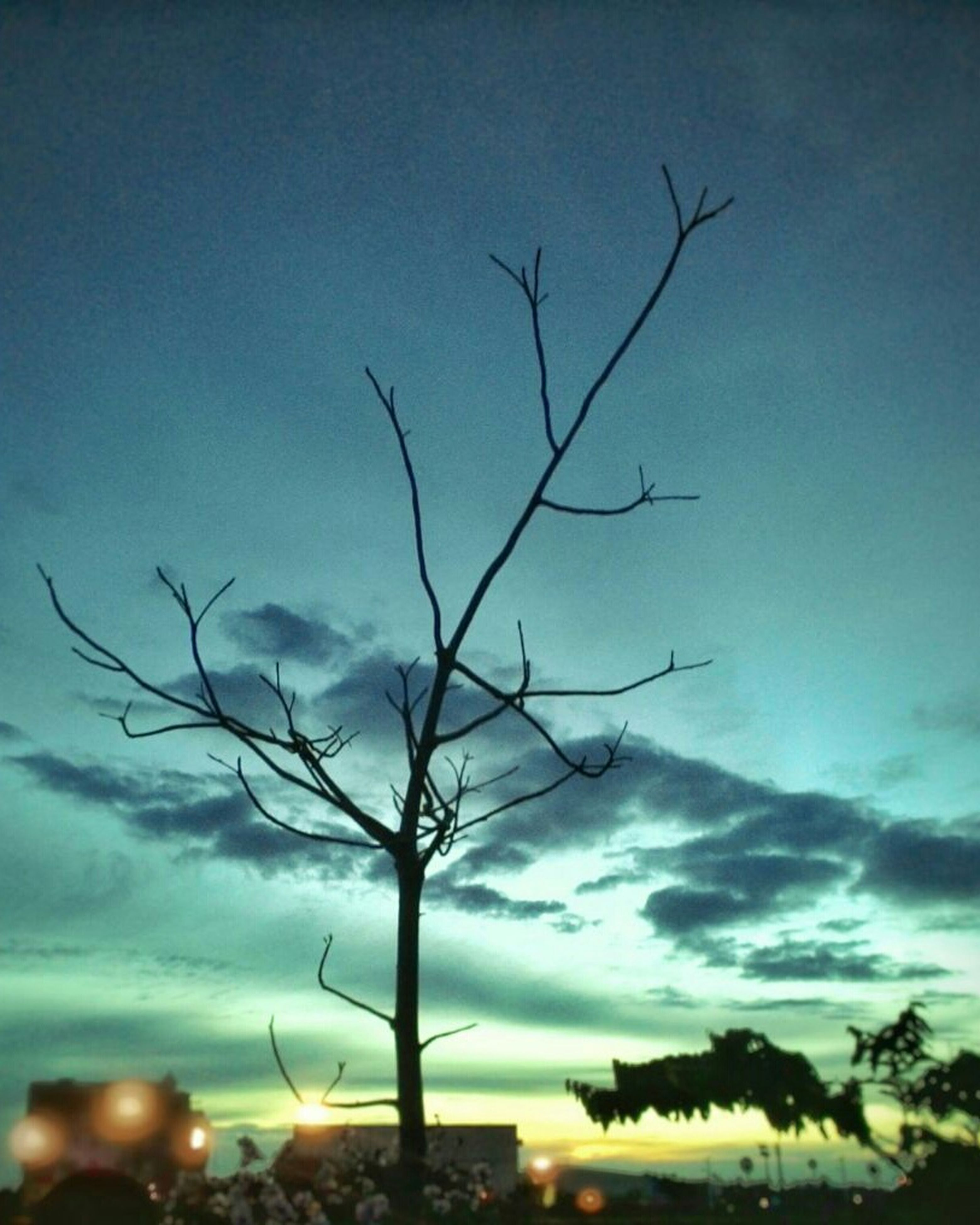 sky, bare tree, tranquility, cloud - sky, silhouette, sunset, tranquil scene, beauty in nature, nature, scenics, branch, low angle view, cloud, tree, dusk, outdoors, idyllic, cloudy, blue, no people