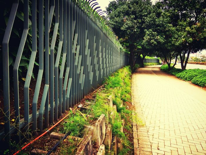 Tree Tree The Way Forward Growth Diminishing Perspective Surrounding Wall Day Footpath Sky Outdoors Branch Nature Treelined Green Color No People Long