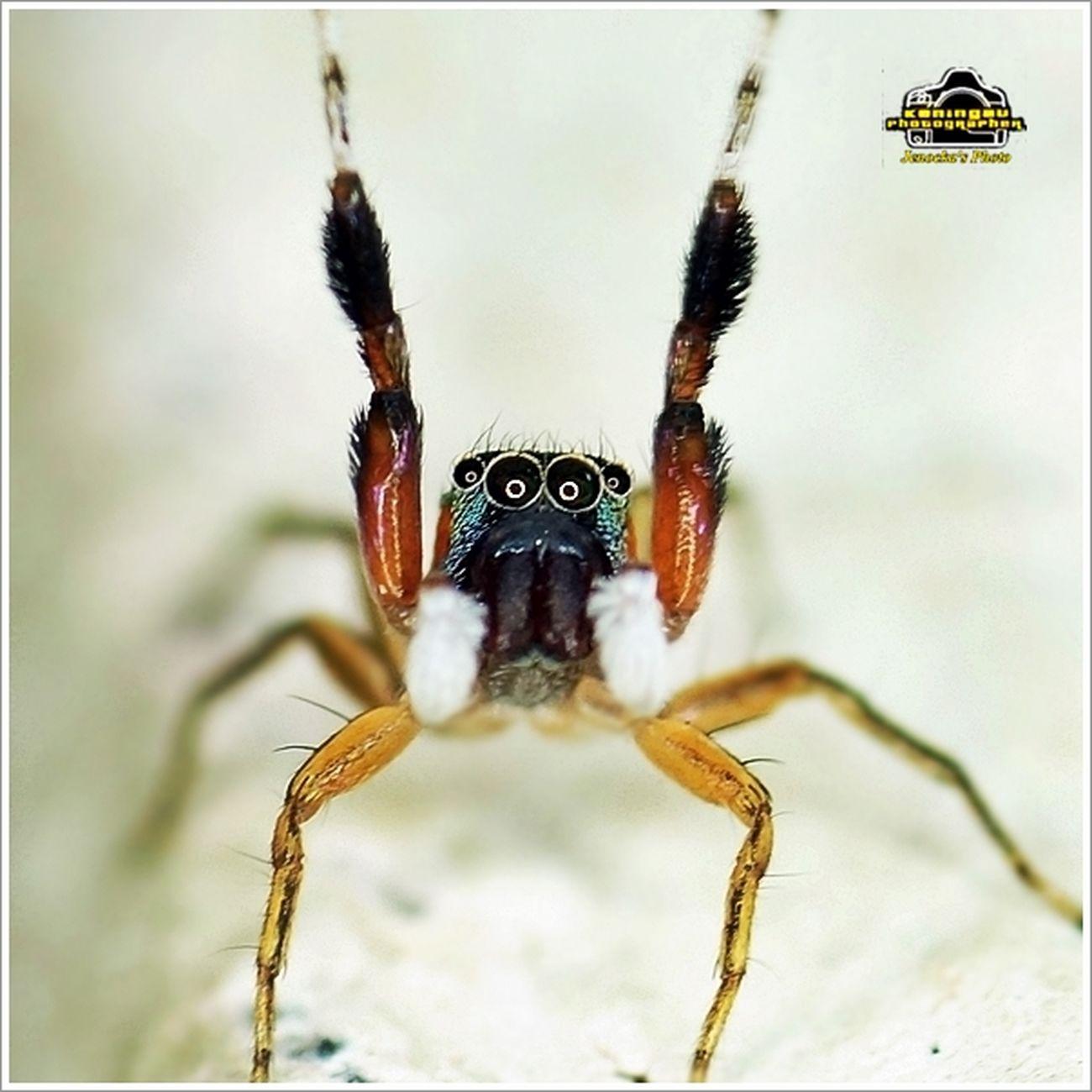 Macro Spider Macro Photography Macro Nature