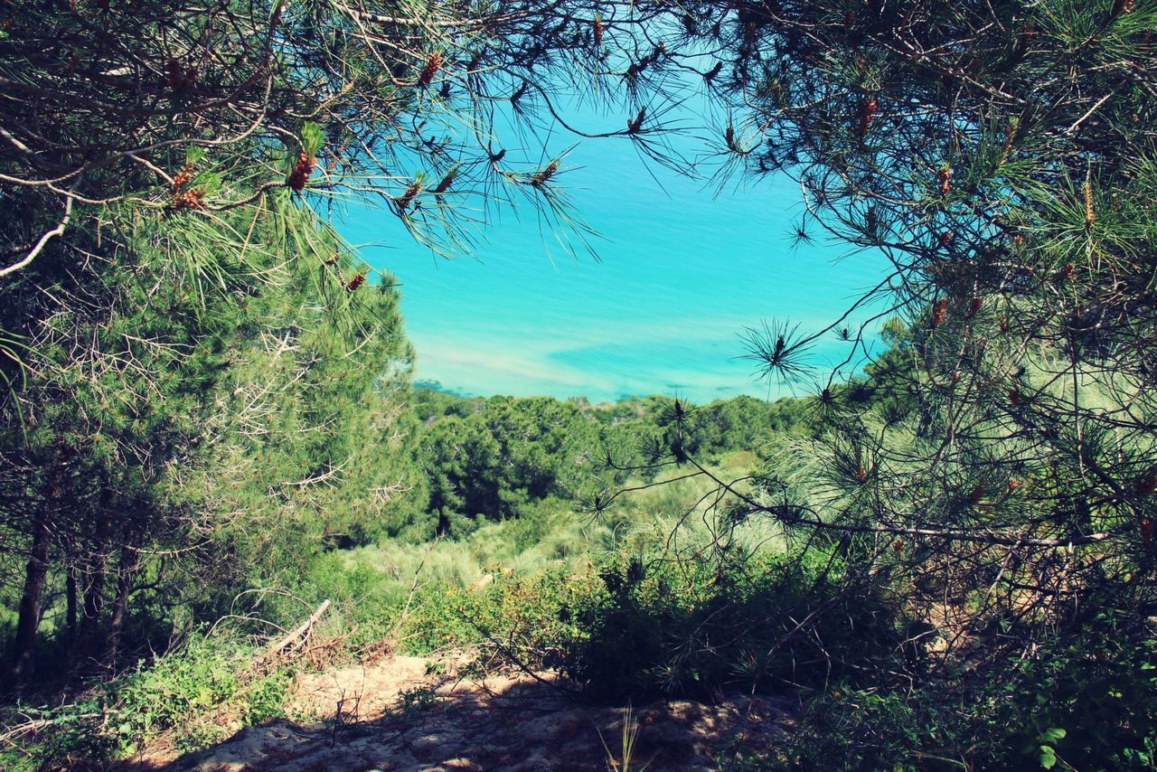Turquoise By Motorola Rafraf Tunisia Island Trees Nature Green Blue Tunisie The Great Outdoors - 2016 EyeEm Awards