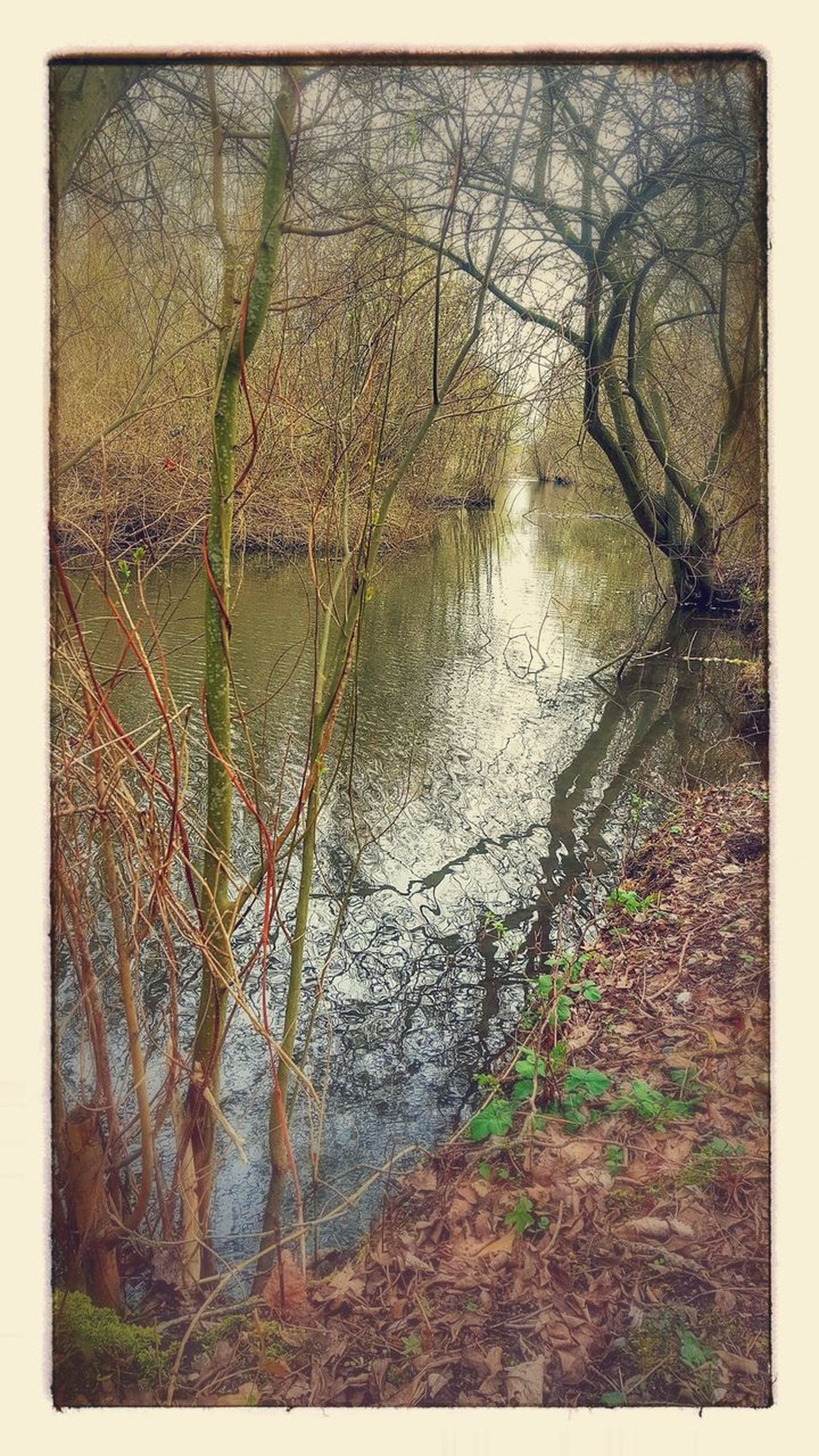 No People Tree Nature Outdoors Water Nature Tranquility