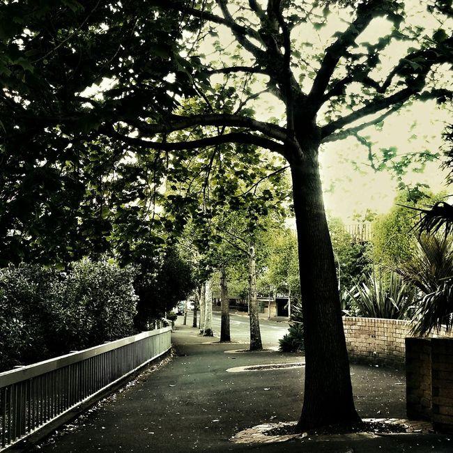 Beautiful Nature Randomwalks OpenEdit