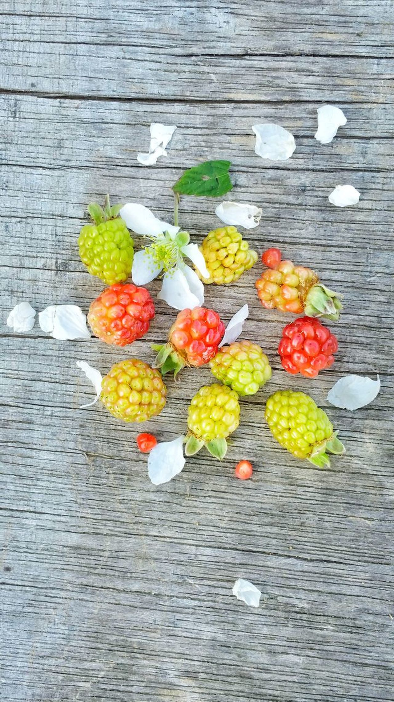 High Angle View Multi Colored Food Wood - Material Freshness Variation Ready-to-eat Outdoors Day Group Dew Berries Wild Blackberries Wild Blackberry Backgrounds Close-up Weathered Wood Room For Copy Unripe Room For Text Wild Berries Healthy Eating Fruit Freshness Bunch Visual Feast