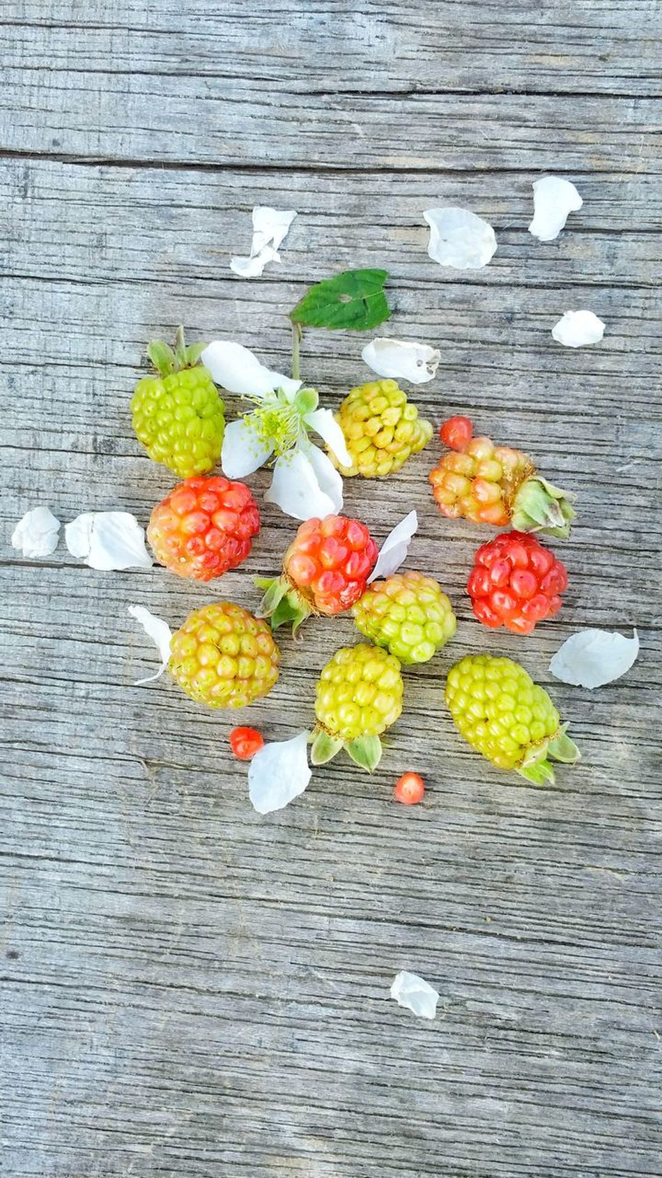 High Angle View Multi Colored Food Wood - Material Freshness Variation Ready-to-eat Outdoors Day Group Dew Berries Wild Blackberries Wild Blackberry Backgrounds Close-up Weathered Wood Room For Copy Unripe Room For Text Wild Berries Healthy Eating Fruit Freshness Bunch