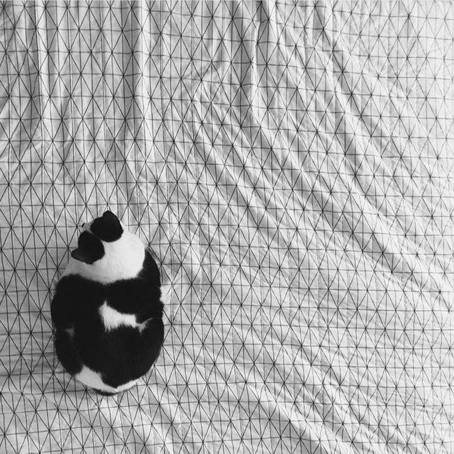 Cat Dadcat Okc Geometric Blackandwhite Oklahoma