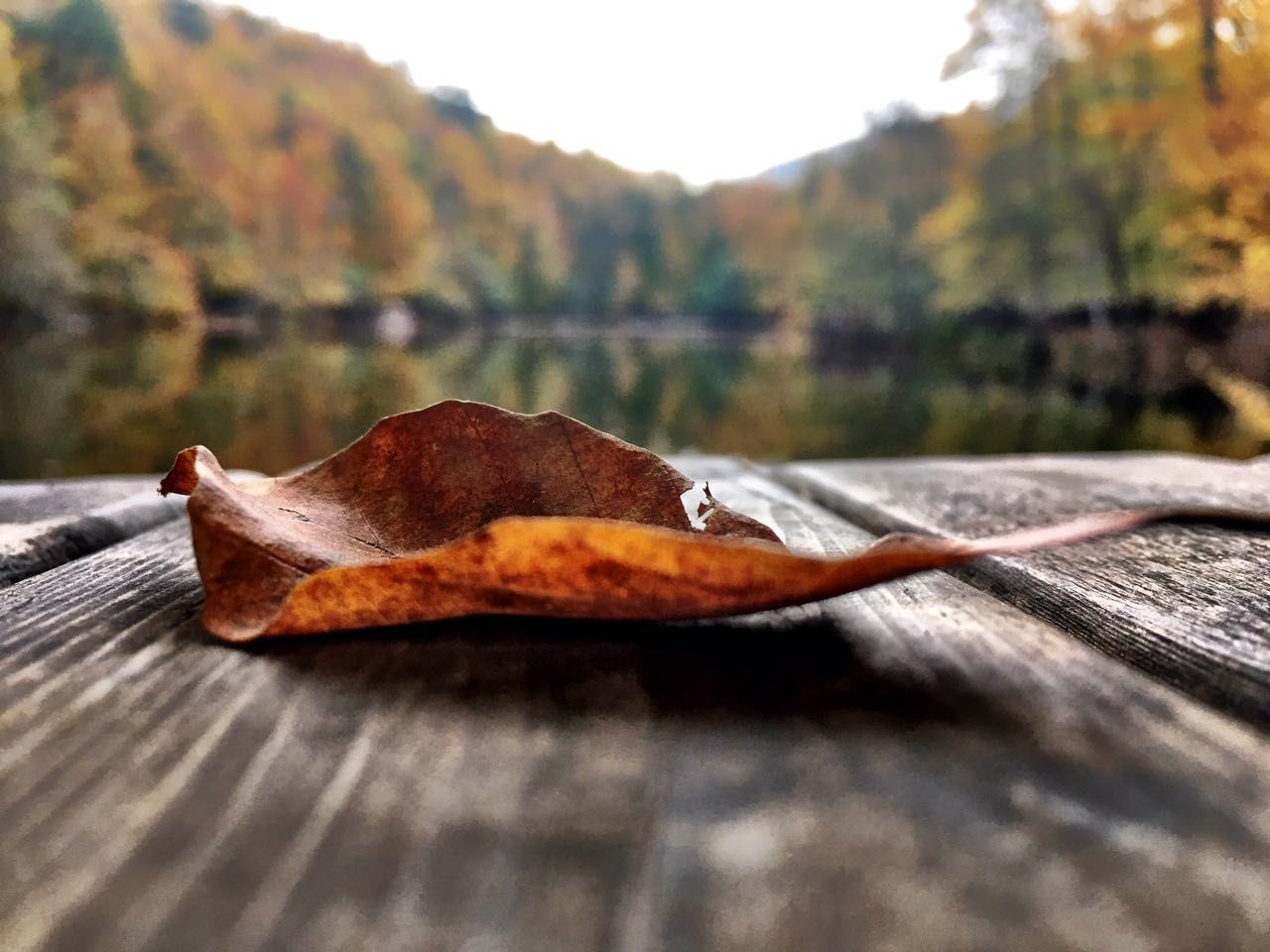 autumn, leaf, dry, change, nature, day, no people, outdoors, close-up, wood - material, beauty in nature, tree, maple