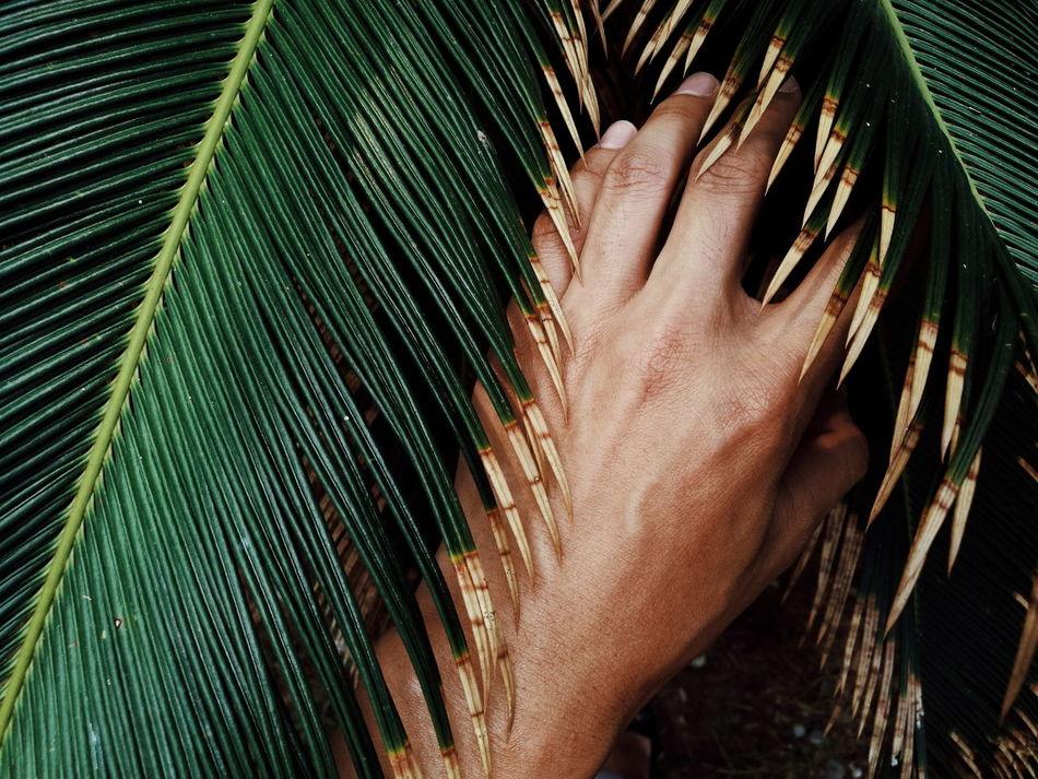 Hand Close-up One Hand Art ArtWork Green Tree Wood Finger