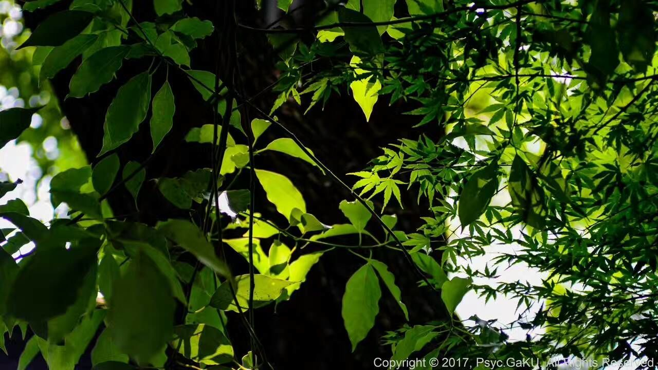 leaf, growth, nature, green color, tree, day, plant, outdoors, lush foliage, beauty in nature, forest, no people, low angle view, foliage, branch, close-up, freshness