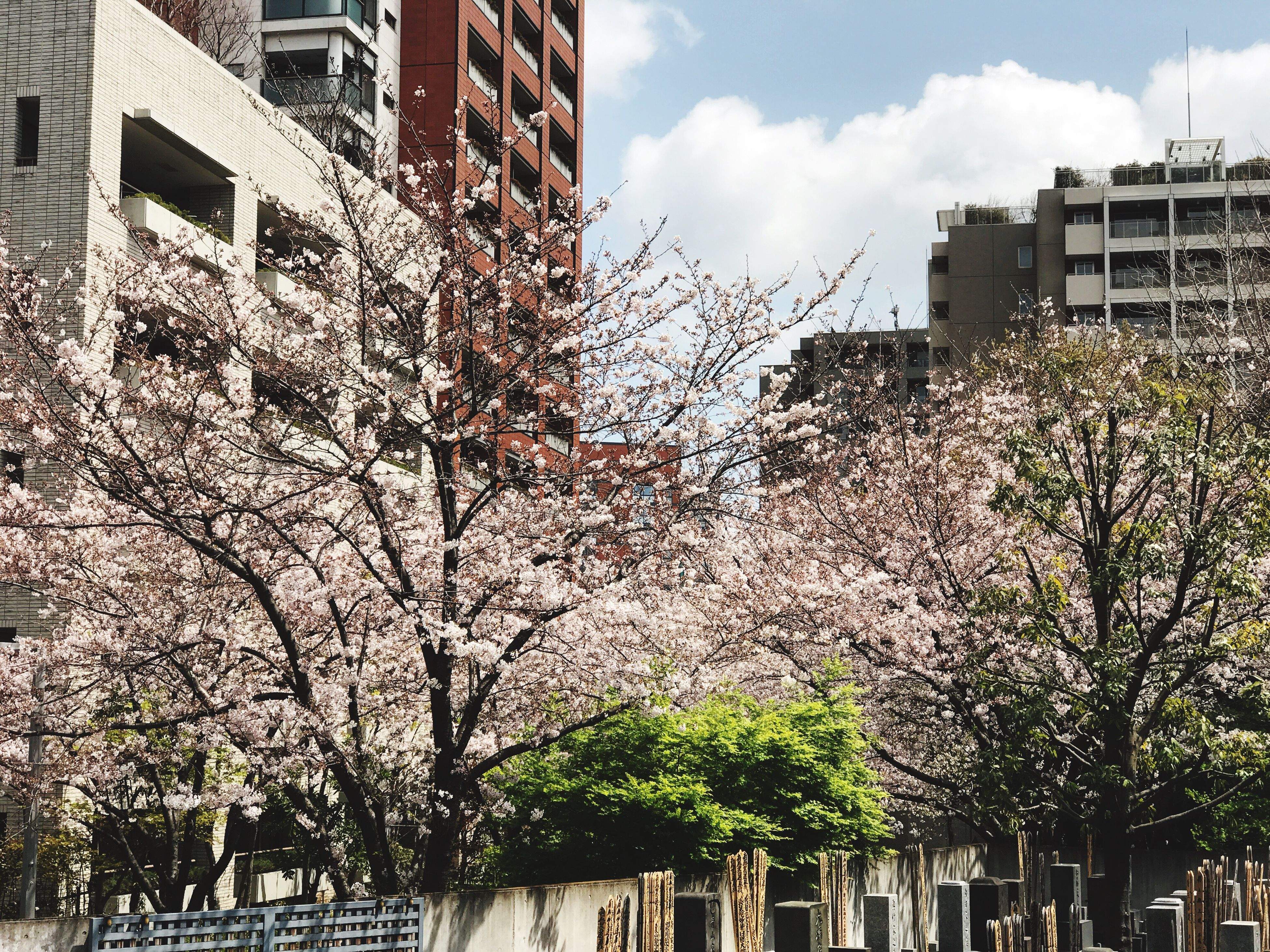 building exterior, low angle view, sky, built structure, architecture, tree, growth, city, no people, sunlight, outdoors, flower, cloud - sky, nature, day, beauty in nature, water