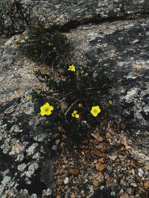 Nature Flowers Mountains EyeEm Best Shots Nature Photography Karkaralinsk Karagandy Kazakhstan