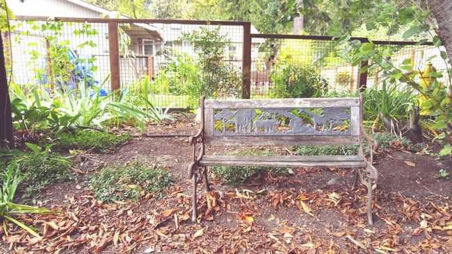 Simplicity Chair Tranquil Scene Garden Home :)