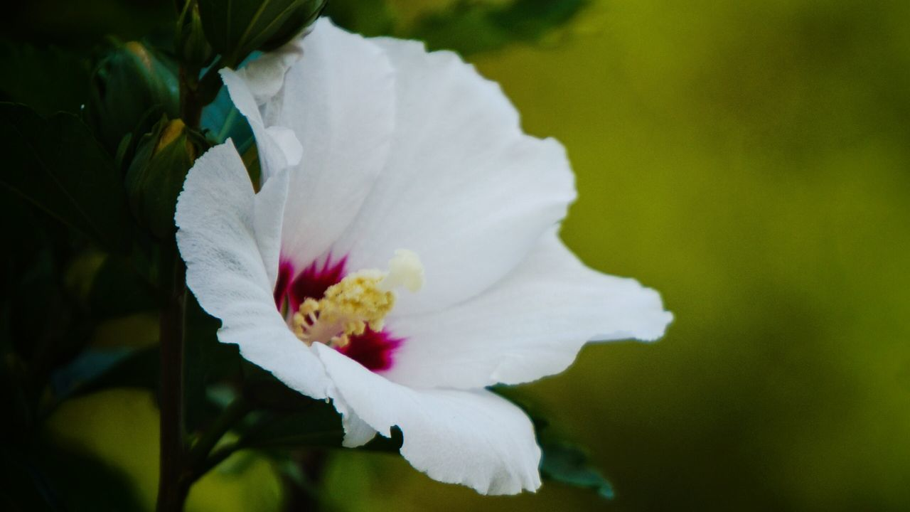 flower, petal, white color, nature, fragility, beauty in nature, growth, flower head, freshness, no people, close-up, outdoors, blooming, plant, day