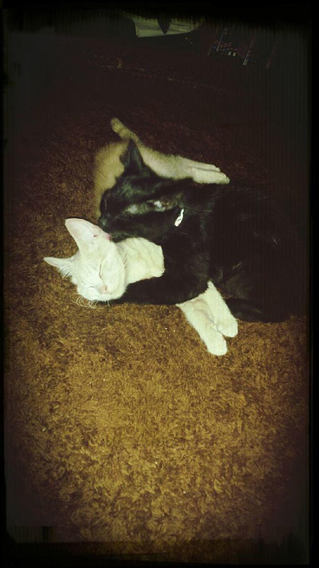 Double cat hug Relaxing