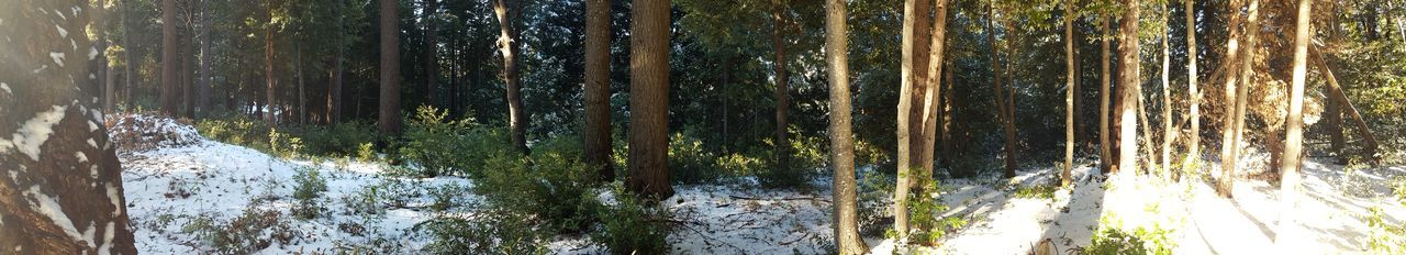 Getty Images Samsungphotography Samsung Galaxy S6 Panoramic Trees Snow ❄ Vacation Time Family Time Beautiful Nature Nature Walk Forest Fresh Air And Sunshine Mountains