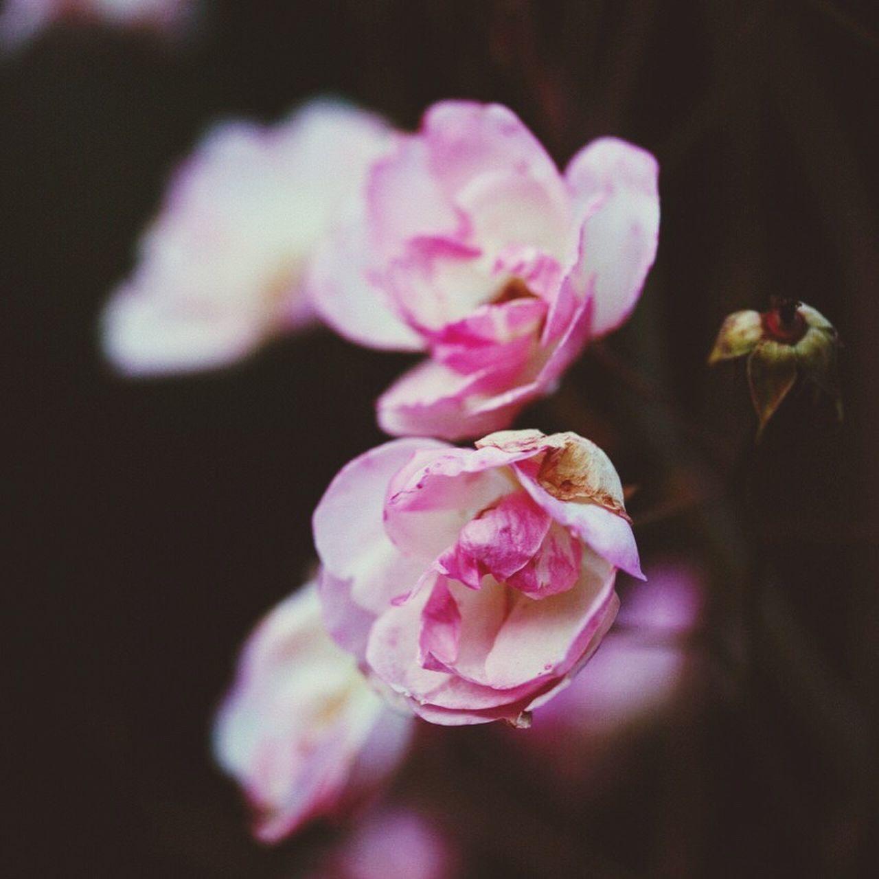 Maximum Closeness Beauty In Nature Flowers,Plants & Garden