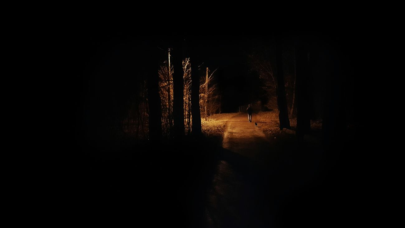 Road to the dark forest Dark Dog Forest Morning Nature Person The Way Forward Tree Walk