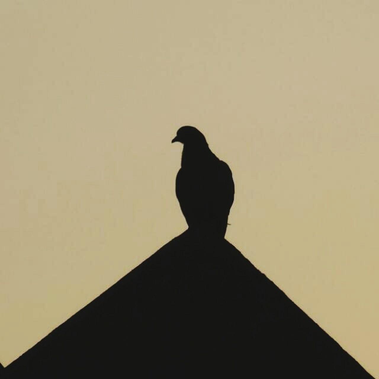 silhouette, bird, no people, animal themes, raven - bird, outdoors, perching, day, sky