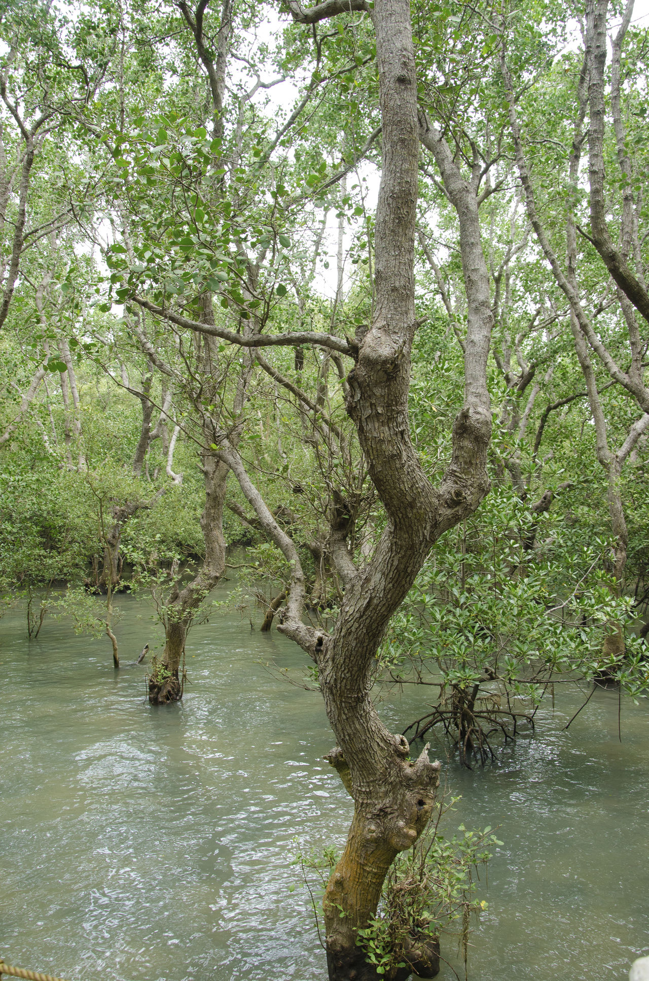 Beauty In Nature Branch Day Forest Growth Lake Mangrove Mangrove Forest Mangrove Swamp Mangroves Nature No People Outdoors Scenics Sky Tranquility Tree Tree Trunk Water