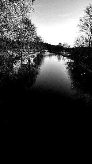 Blackandwhite River Eider Hanging Out Taking Photos Relaxing