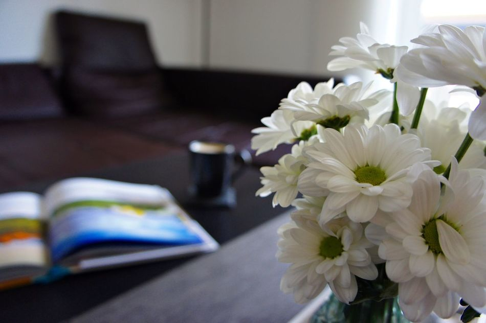 Book Close-up Coffee Day Dream Dreaming Flower Focus On Foreground Freshness Holiday Home Interior Indoors  Learn Learning No People Petal Student Student Life Study Study Time Studying Table Vase Wallpaper White Color