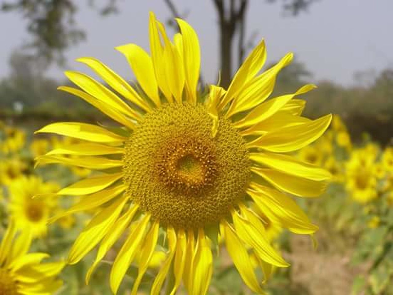 flower, yellow, petal, nature, fragility, flower head, outdoors, plant, freshness, growth, close-up, beauty in nature, day, focus on foreground, summer, springtime, no people