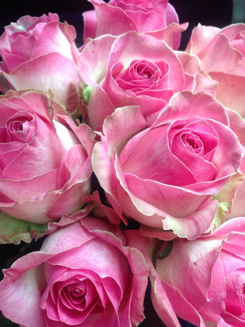 flower, rose - flower, pink color, petal, flower head, beauty in nature, fragility, nature, no people, freshness, close-up, plant, outdoors, day, bouquet
