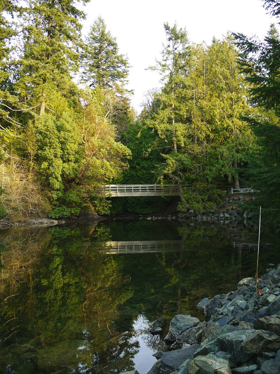 tree, reflection, water, nature, tranquil scene, tranquility, outdoors, no people, growth, beauty in nature, day, bridge - man made structure, lake, scenics, forest, sky