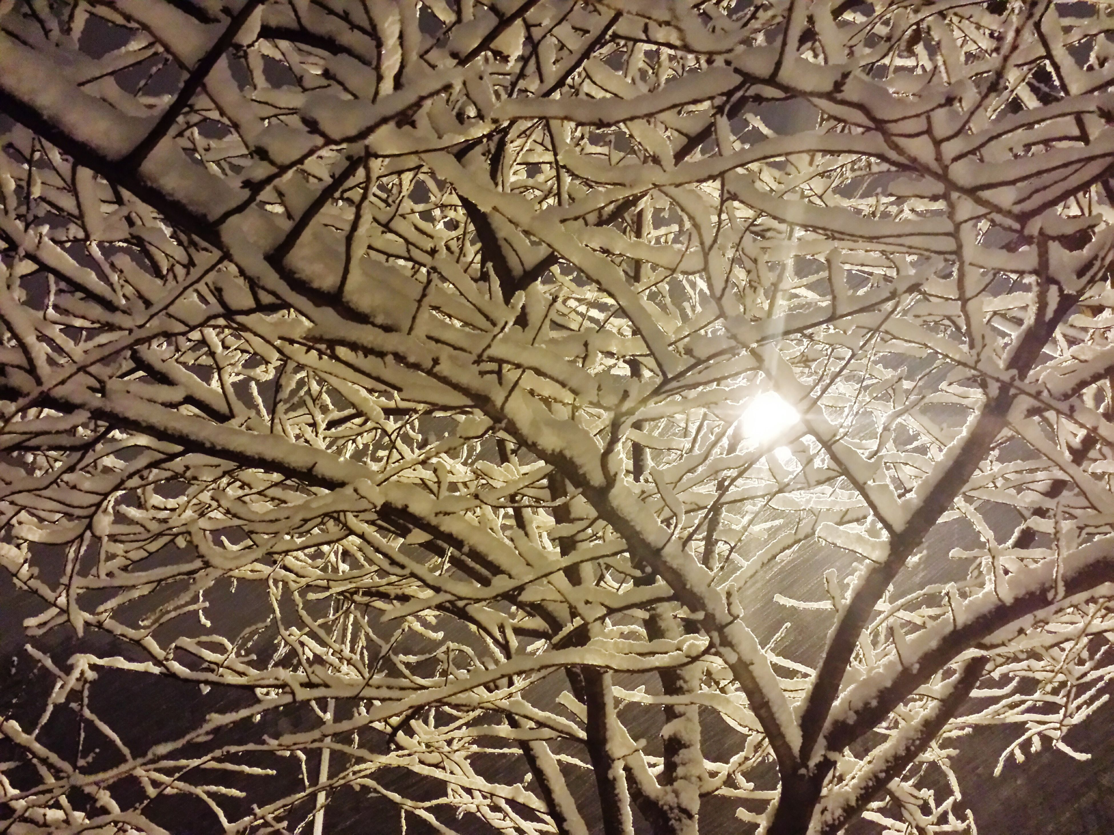 """Cold Winter Nights"" Dec 2014"
