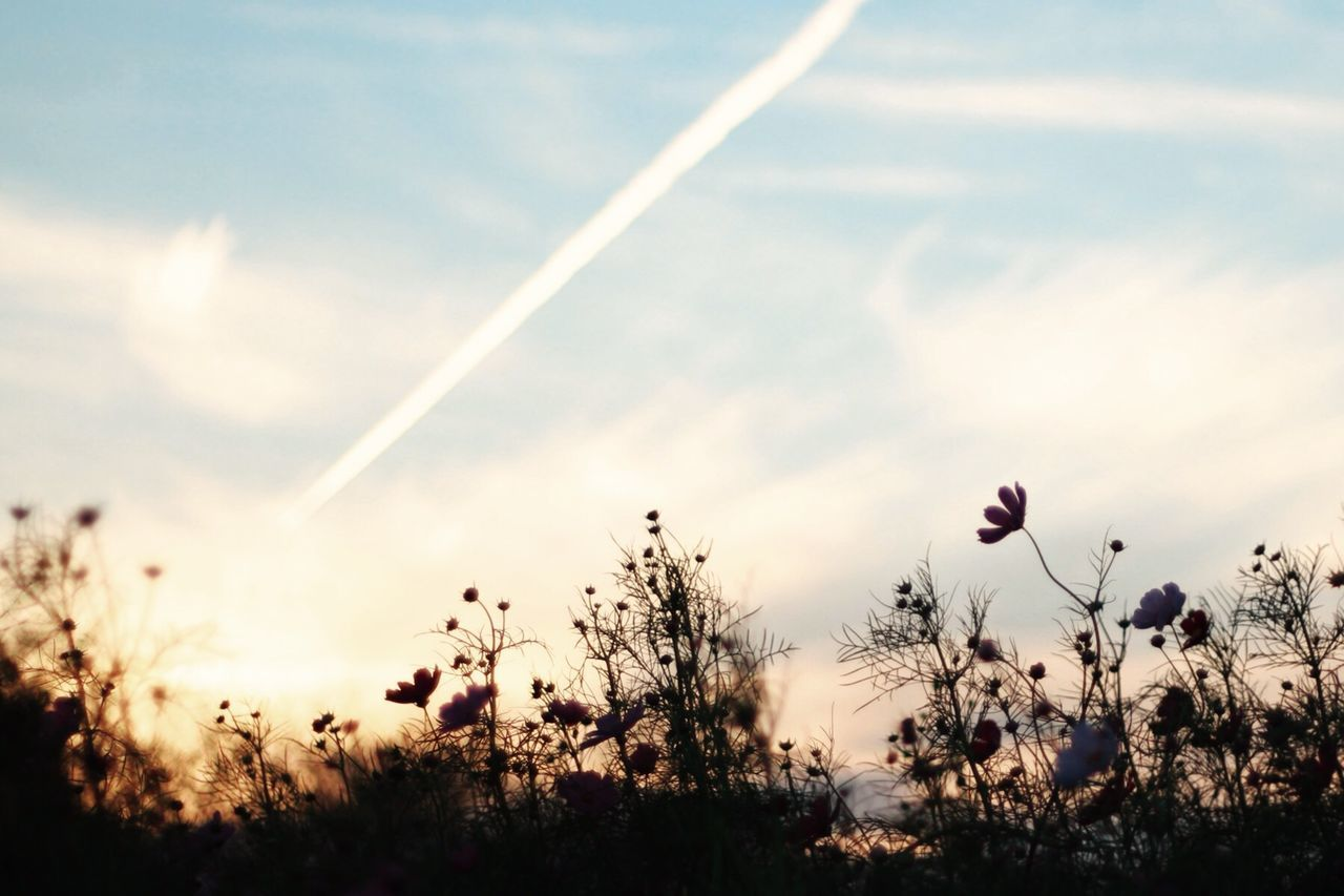 EyeEm Nature Lover コスモス EyeEm Best Shots Sky_collection EyeEmBestEdits EyeEmBestPics Silhouette フィルターかけると迷うからスッピン 日本の秋はいいだろう Fall Beauty
