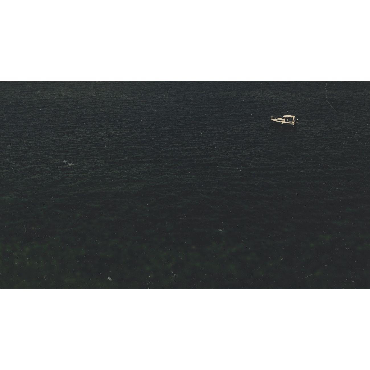 AMPt_community Nature Sea Nature_collection