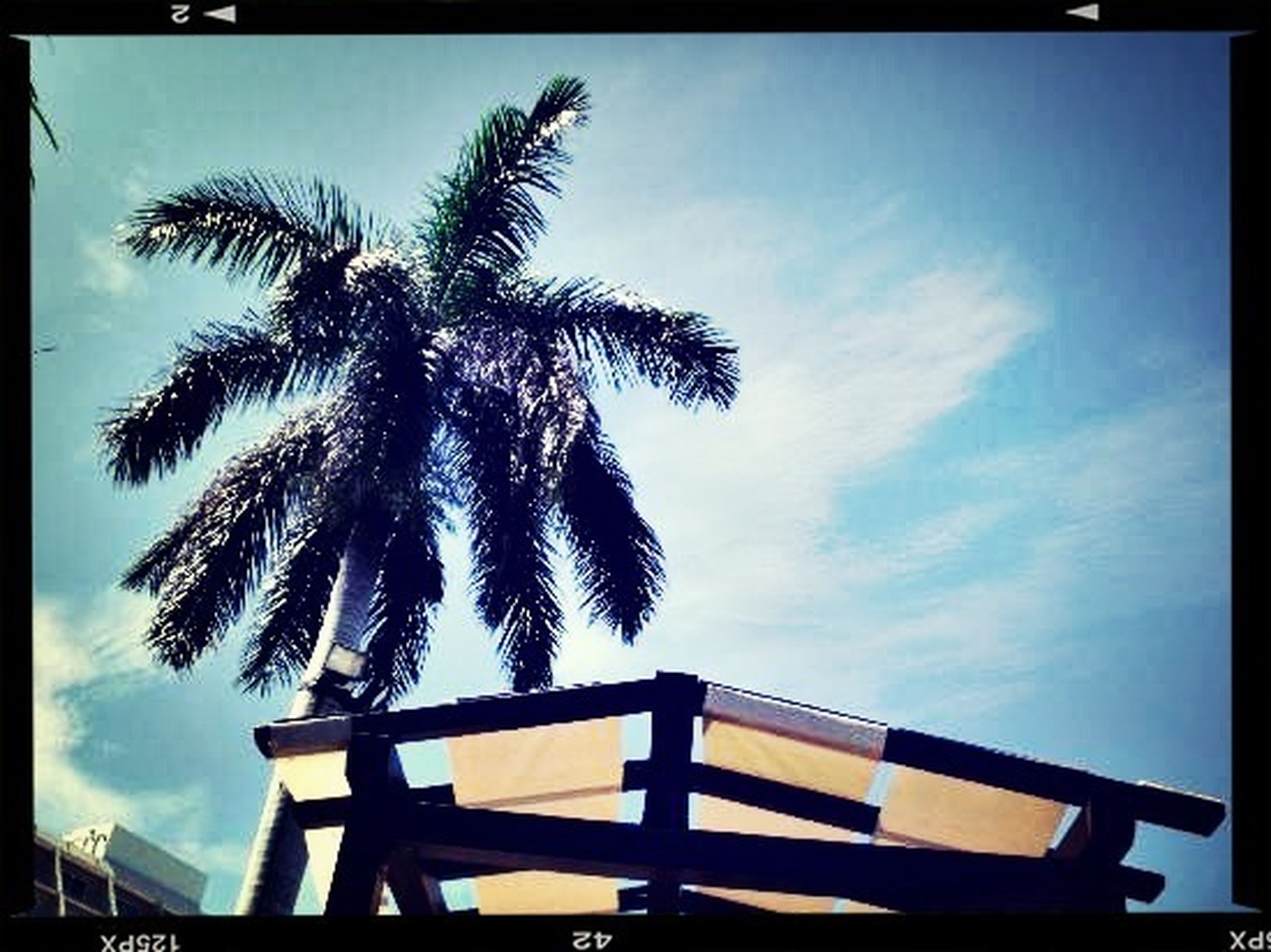 low angle view, palm tree, transfer print, sky, tree, auto post production filter, silhouette, cloud - sky, cloud, growth, built structure, blue, nature, sunlight, no people, sunset, outdoors, beauty in nature, architecture, tranquility