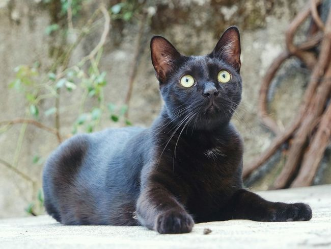 Scared... Animal Themes One Animal Pets Domestic Animals Mammal Black Color Cat Domestic Cat Focus On Foreground Whisker Looking At Camera Feline Zoology Day Animal No People Open Edit Eye4photography  Fresh 3 EyeEm Best Shots Cats Of EyeEm Pet Photography  Selective Focus Looking Away