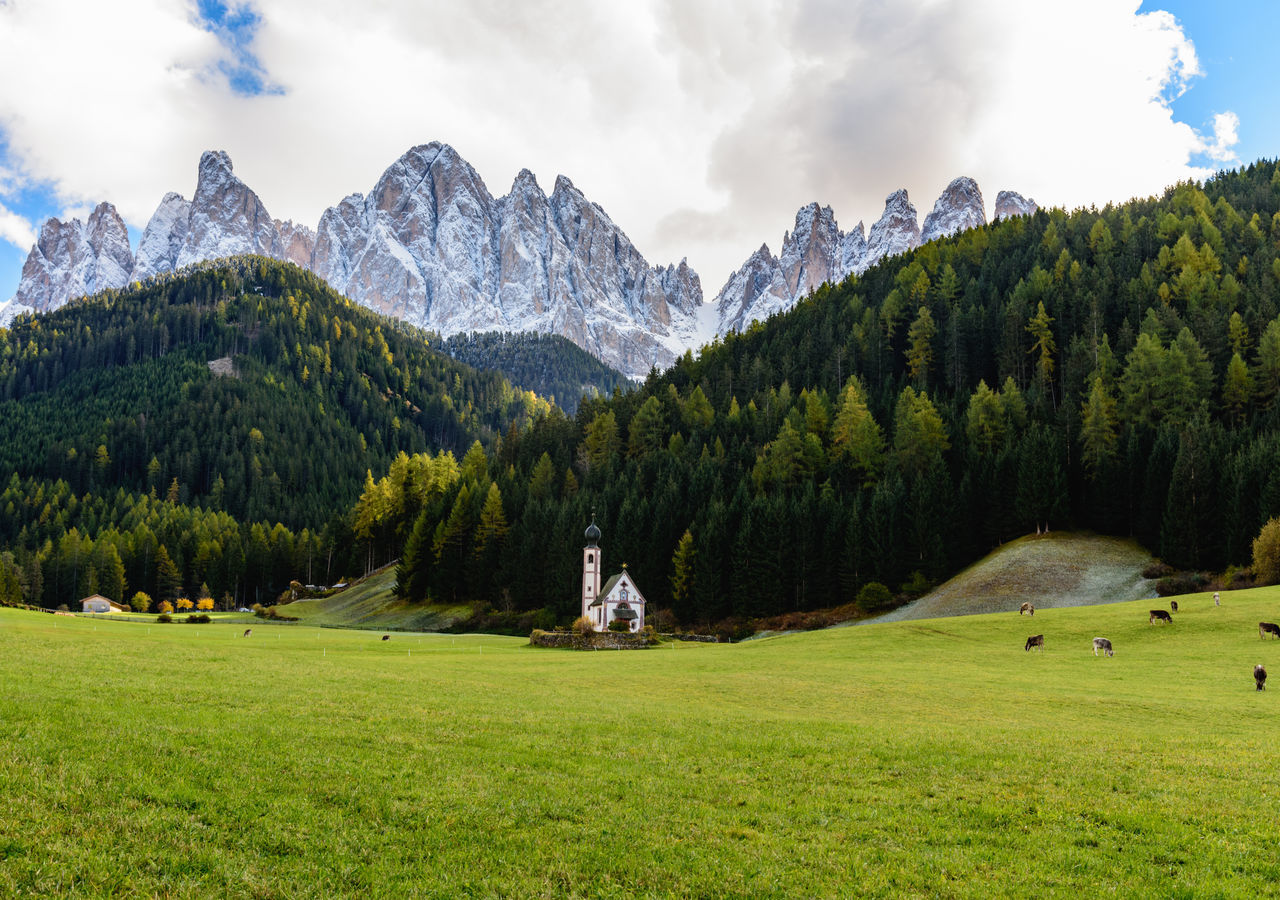 Panoramic Shot Of Trees On Grassy Field Against Mountain Range