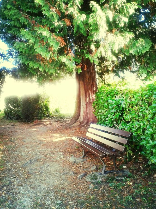 Hugging A Tree Garden Photography Beautiful Place Lisieux