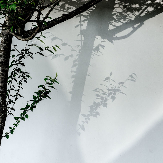 shadow duet Duet Light Light And Shadow Nara Shadow Tree Wall White