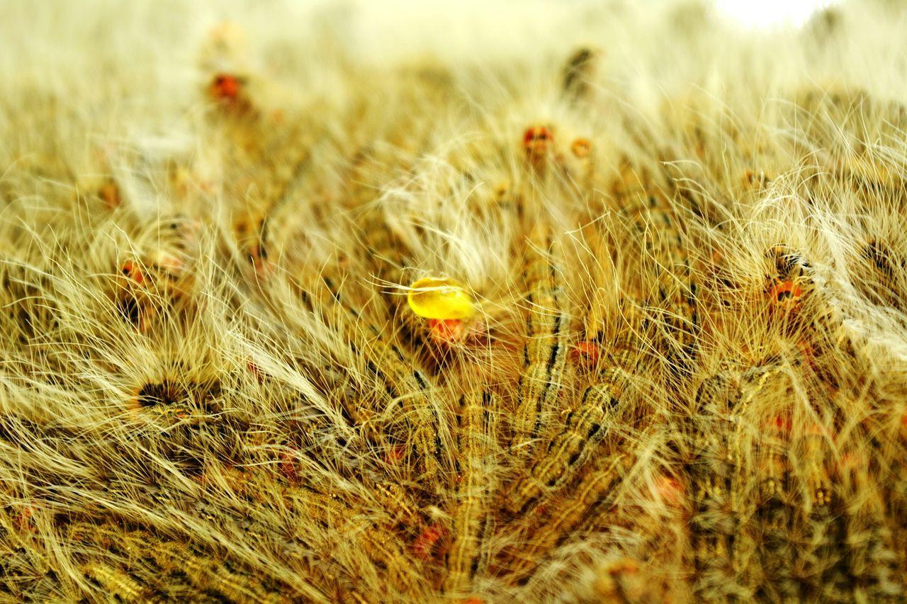 Maximum Closeness Photo Of The Week Photo Of The Month Catterpillar
