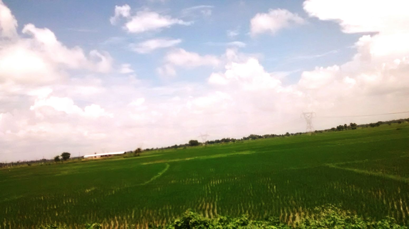 Village Village View Farming Paddy Field Landscape Agriculture Beauty In Nature Green Color