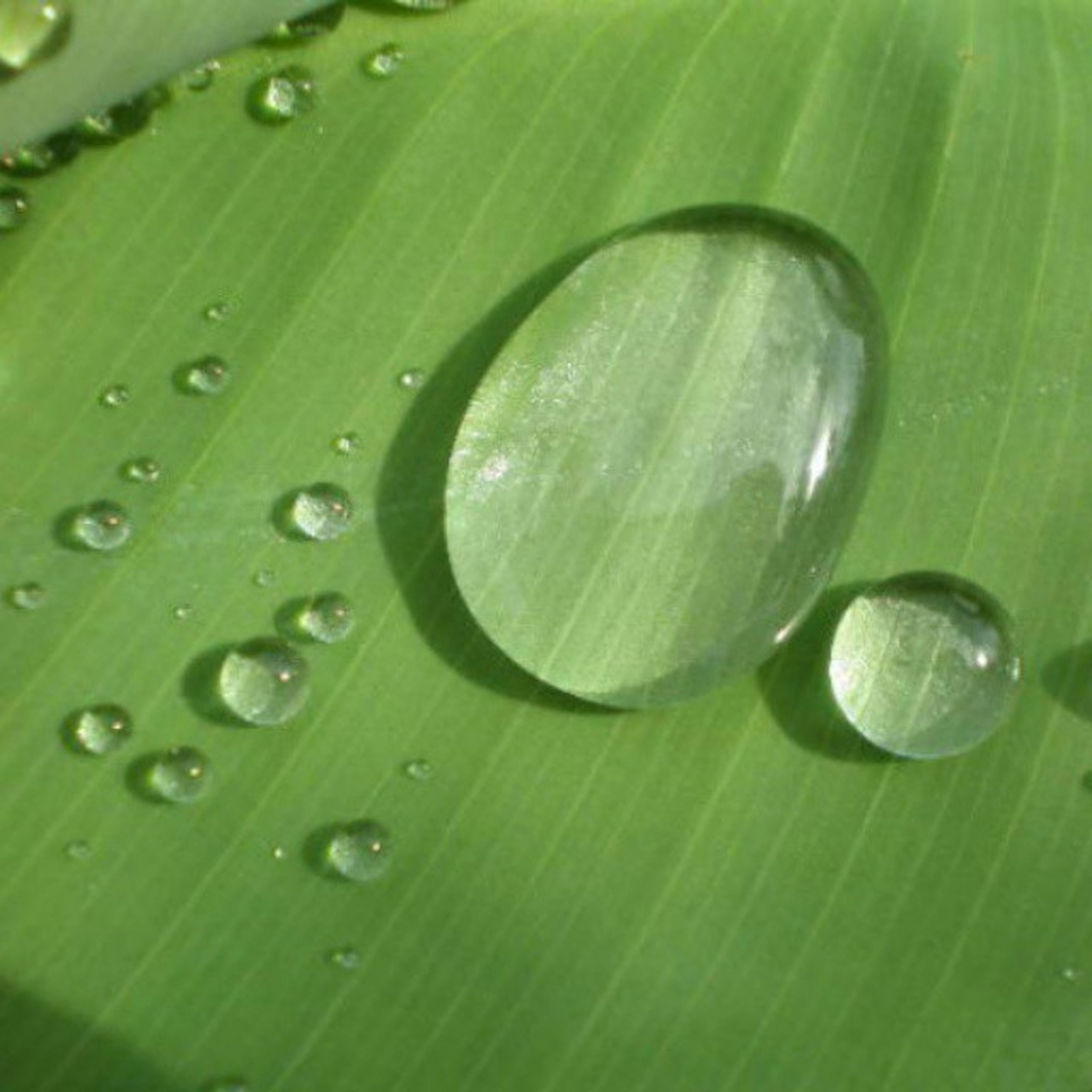green color, drop, leaf, close-up, freshness, growth, water, nature, wet, beauty in nature, leaf vein, natural pattern, fragility, dew, green, plant, full frame, day, focus on foreground, no people