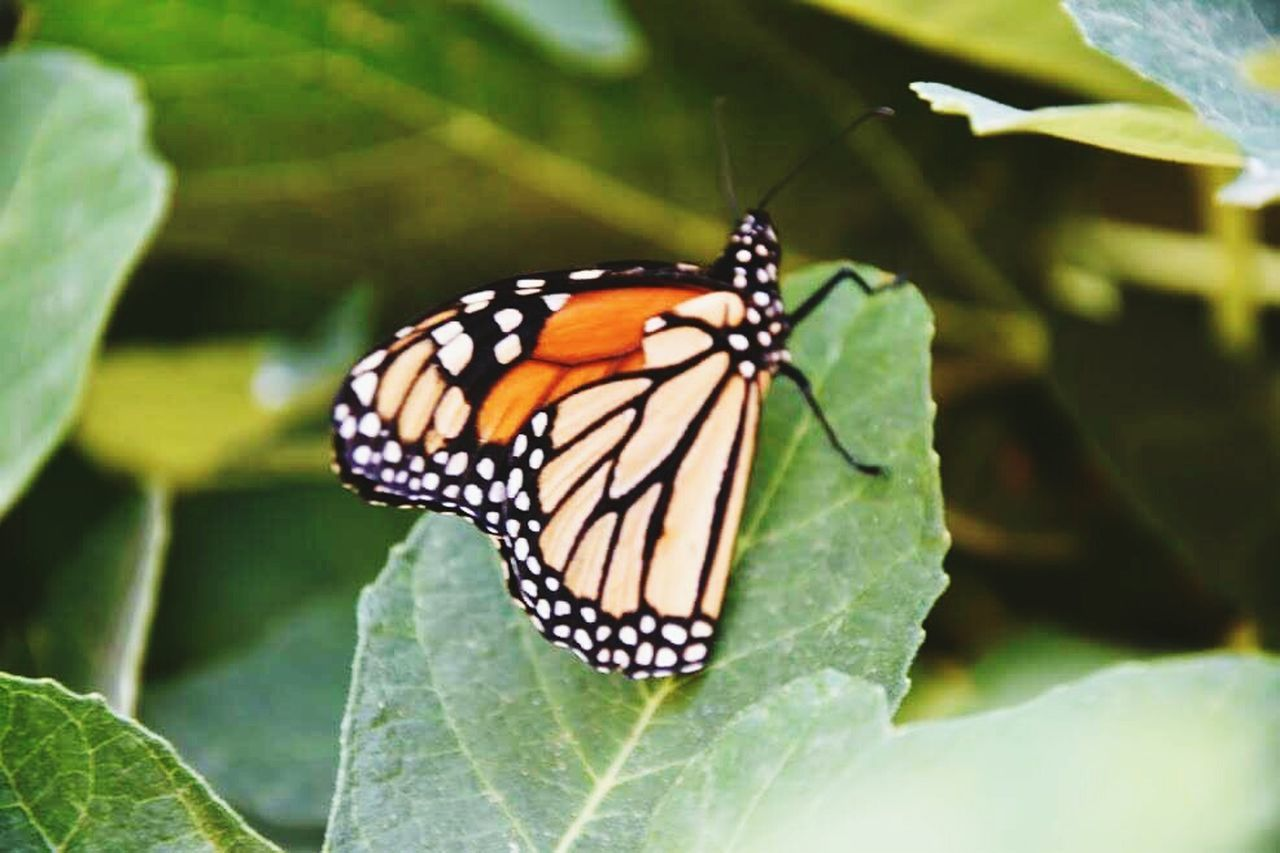 Moth Love To Take Photos ❤ First Eyeem Photo Morocco Papillon