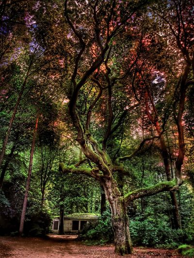 Beautiful Nature in Elmshorn Germany🇩🇪 In The Forest Hdr_lovers Sunset Hdr Edit Hdr_arts