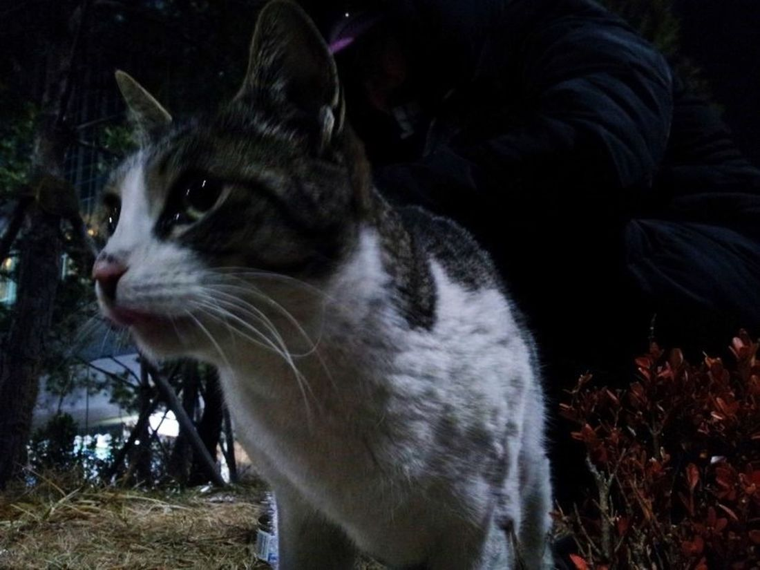 People & Cats Seoukchon Lake Cats Cat Lovers Wild Cats Winter 2016 Little Cats A Feral Cat Alley Cat Stop Your Step..see Animal Photography