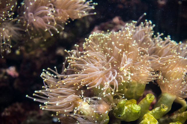 Anemone Beauty In Nature Glowing Nature Phosphorescence Sea Life Water